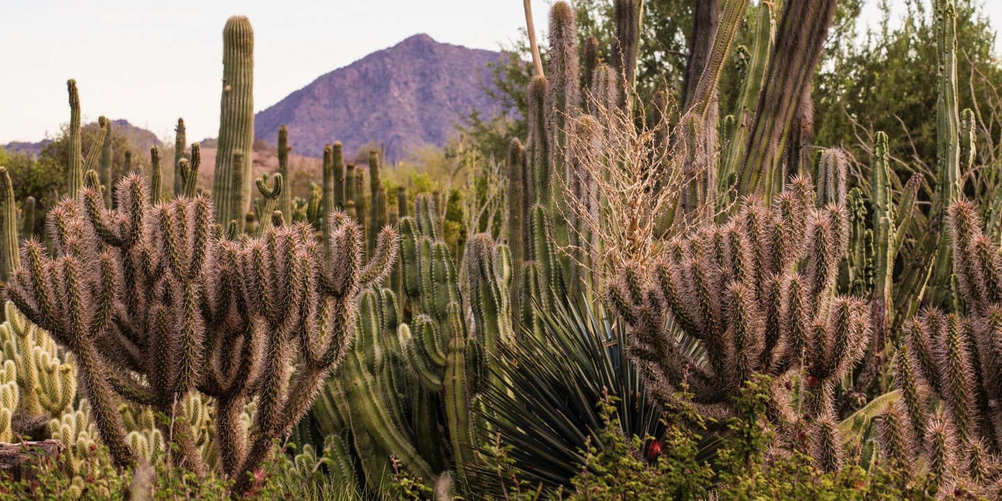 Desert Botanical Garden In Phoenix Via