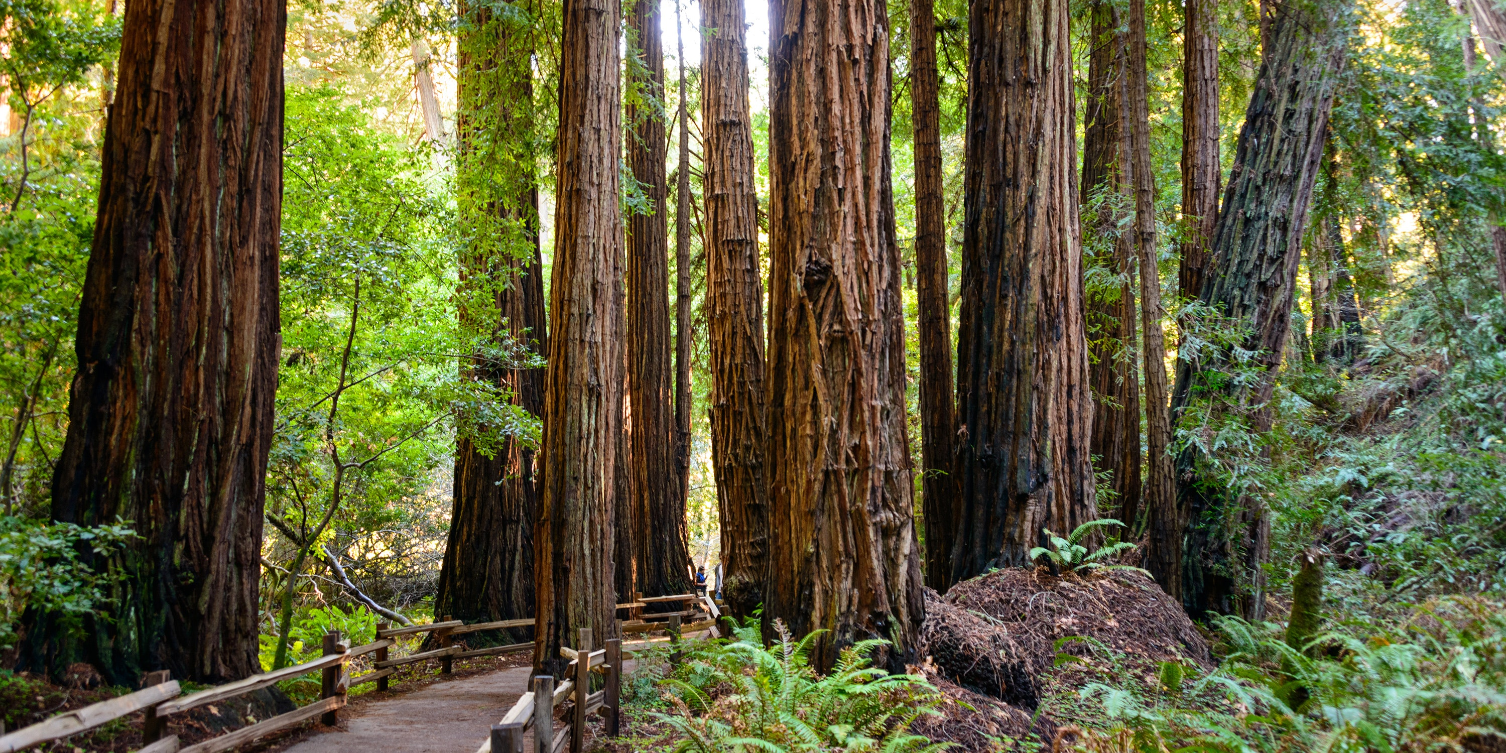 What To See And Do In Muir Woods National Monument Via