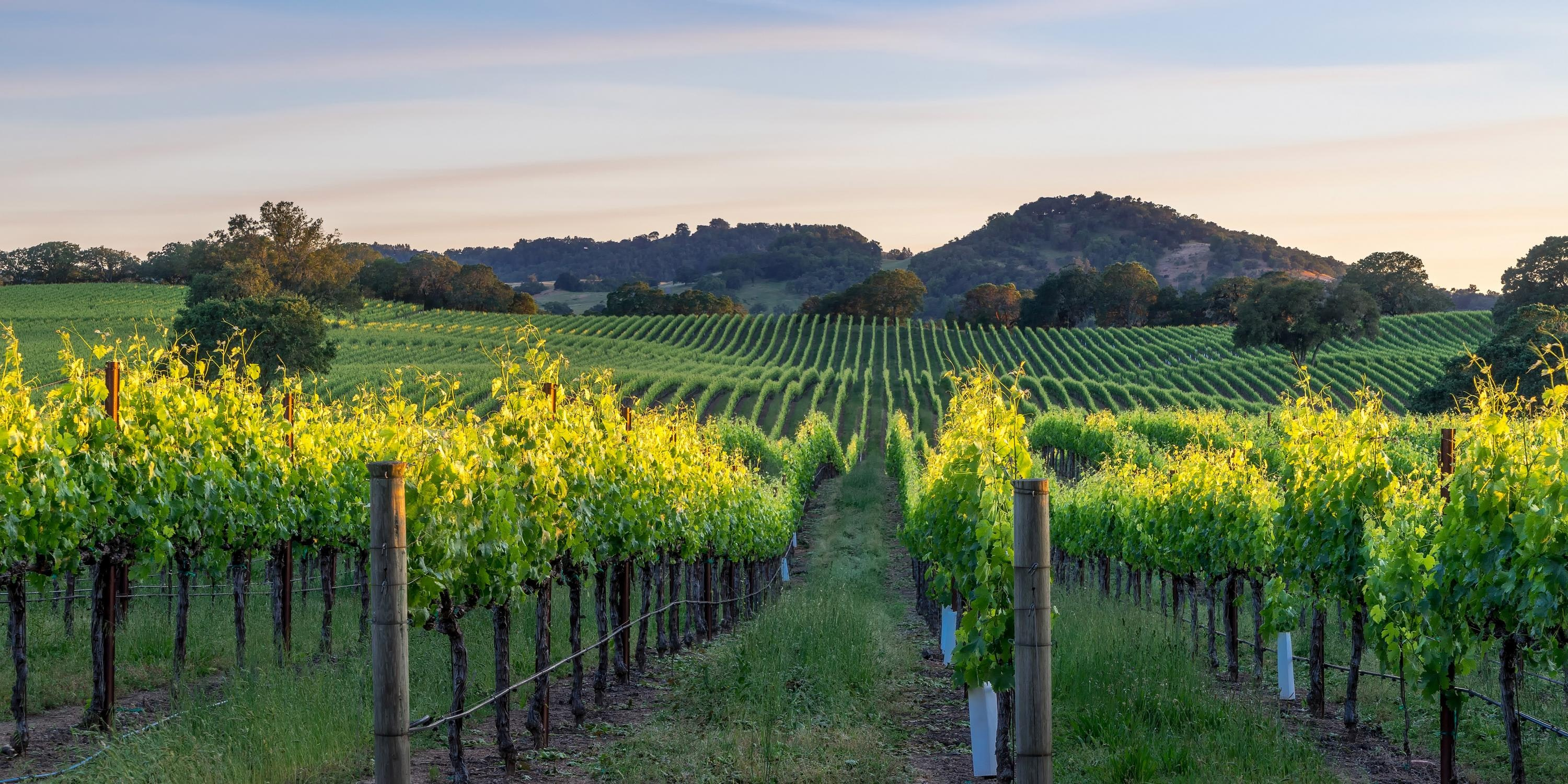 Things to do on a Fall Weekend in Healdsburg, CA