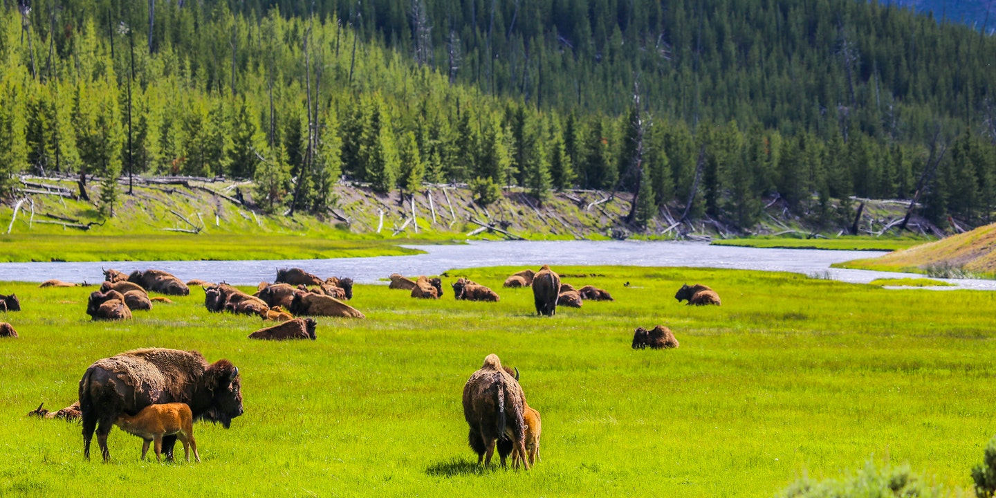 Surprising Facts About Yellowstone National Park | Via